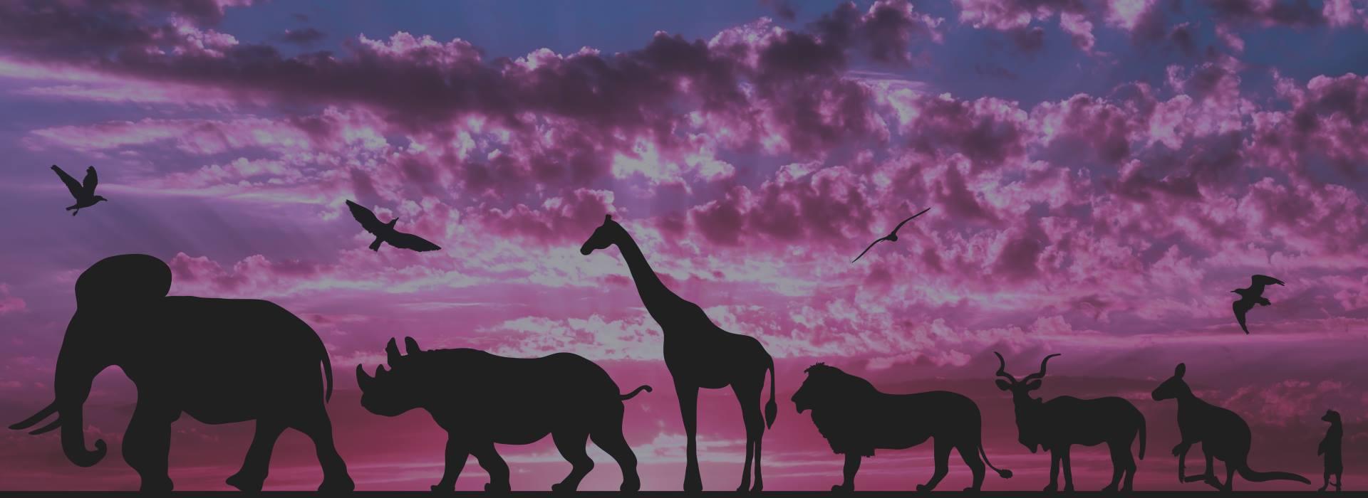 animal-spirit-d-animals