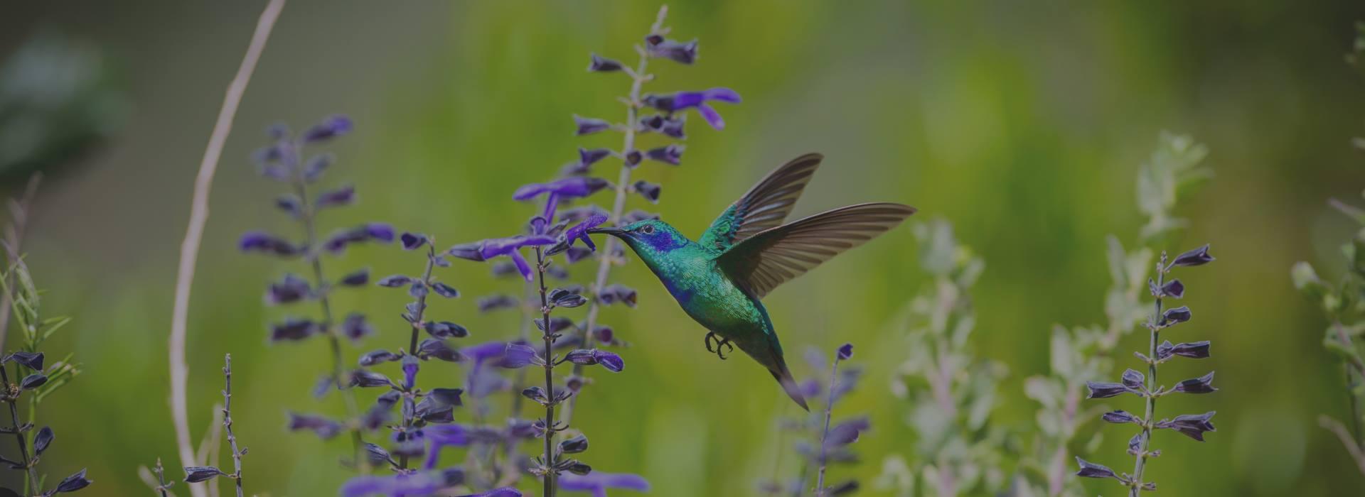animal-spirit-d-bird