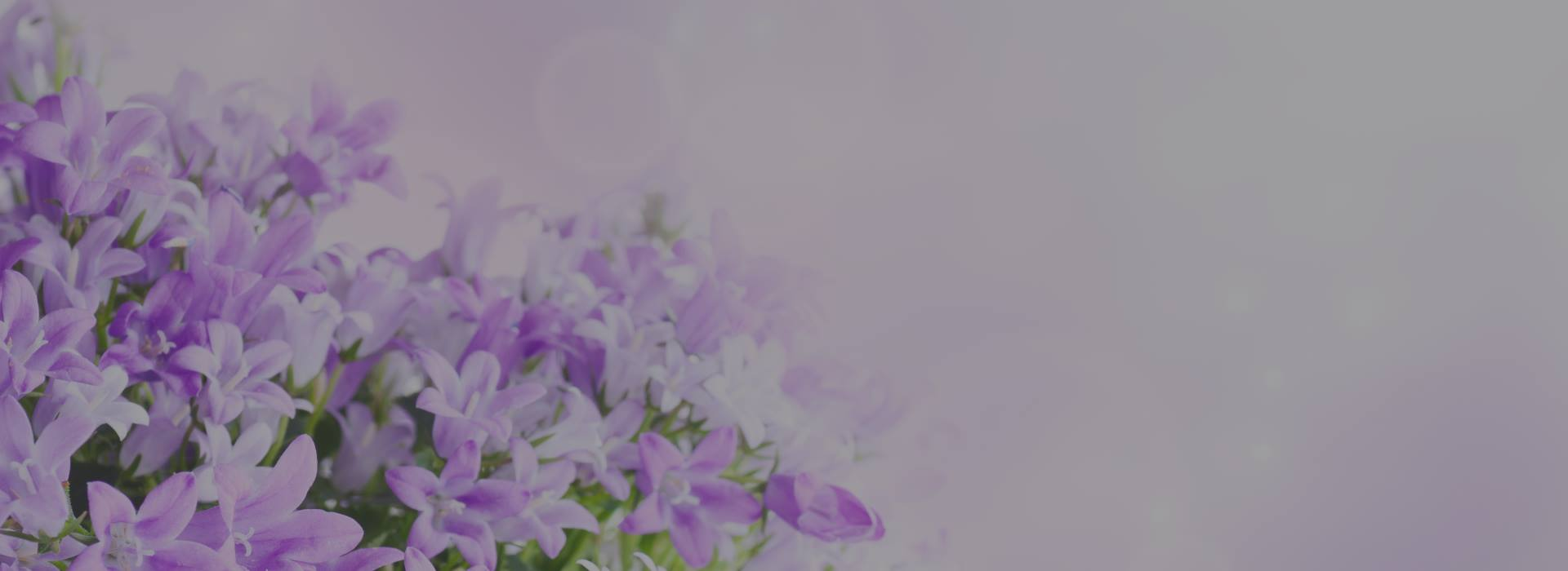 animal-spirit-d-flowers